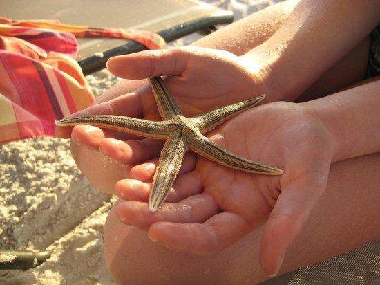 Captiva Beach Resort: Great find at the beach...