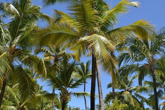 Paradisus Punta Cana: Palmeras
