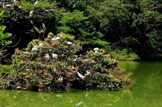 Ecoparque de las Garzas: El lago de las Garzas