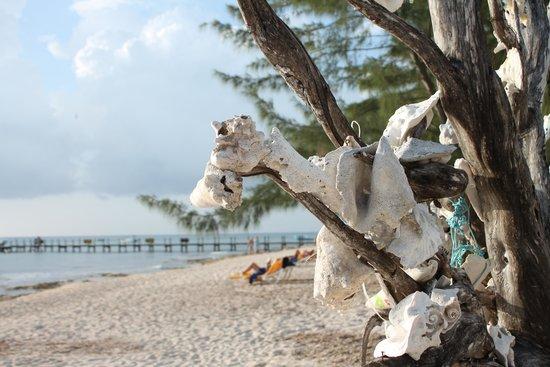 Iberostar Cozumel : The Conch tree