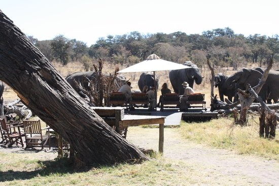 Somalisa Camp- African Bush Camps : Ellies at the pool