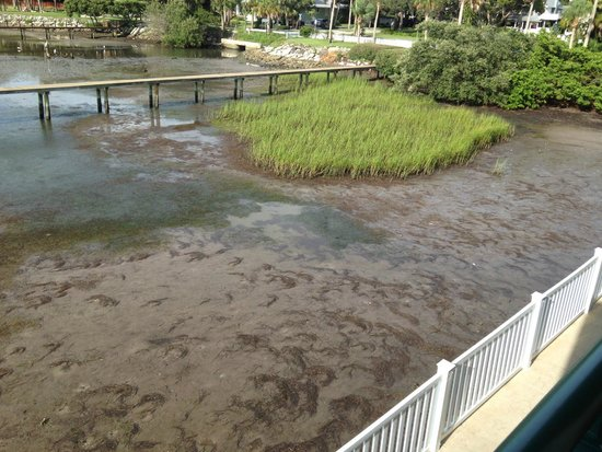 Best Western Plus Yacht Harbor Inn: view of swampy water out our door of third room