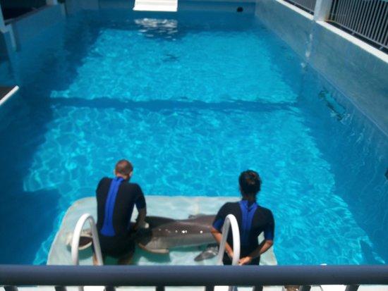 Clearwater Marine Aquarium: DANDOLE MASAJES A WINTER