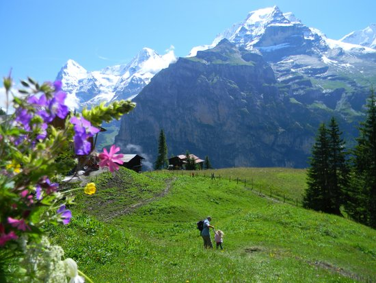 Eiger Guesthouse: My wild flower bouquet