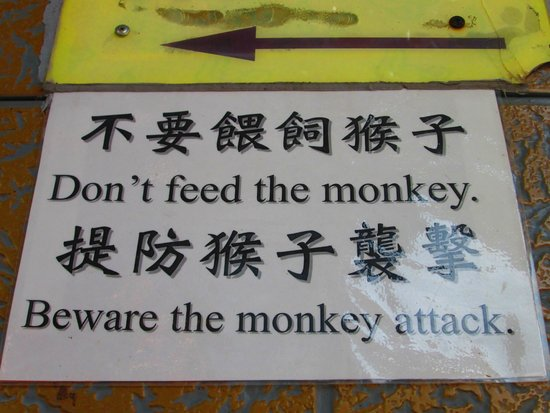 Ten Thousand Buddhas Monastery (Man Fat Sze): Don't feed monkeys!