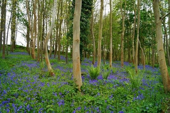 Fairhaven Woodland and Water Garden: Fairhaven May 2014