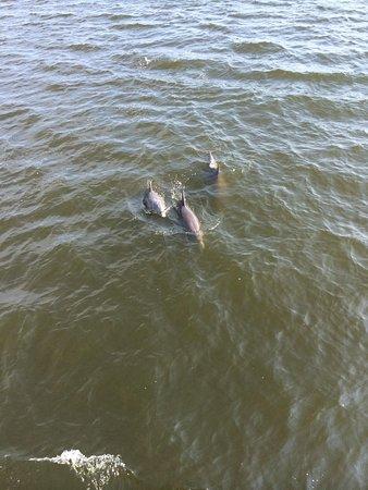 The Fun Boats Dolphin Cruises: One of many many sightings!