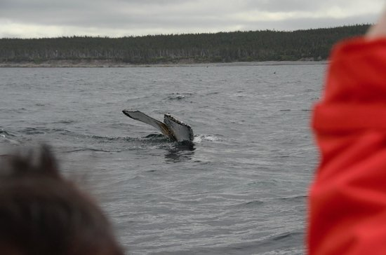 Elaine's B&B by the Sea Zodiac Tours : A sense of how close the whales came