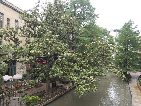 San Antonio River: Plenty of flora (and some fauna)