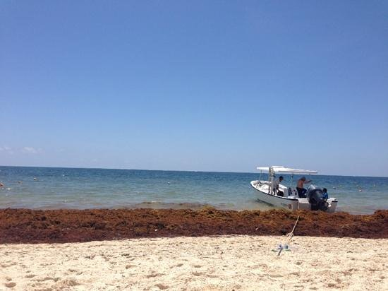 Ocean Coral & Turquesa: Beach covered with sea grass