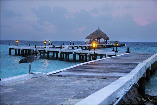 Eriyadu Island Resort : View to the dock
