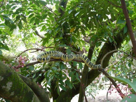 Ocean Jupiter: Pit Viper at Farm