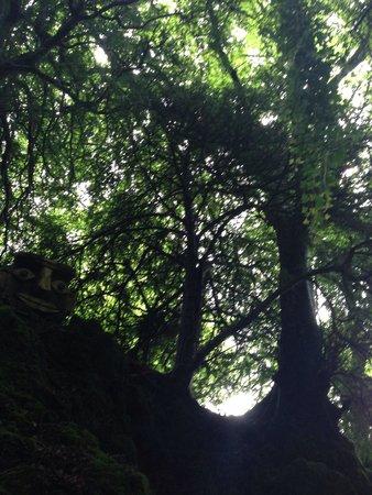 The Secret Forest: Beautiful walk