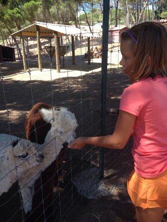 Parc Zoologique de Frejus : Кушают