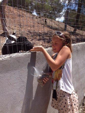 Parc Zoologique de Frejus : Козлик