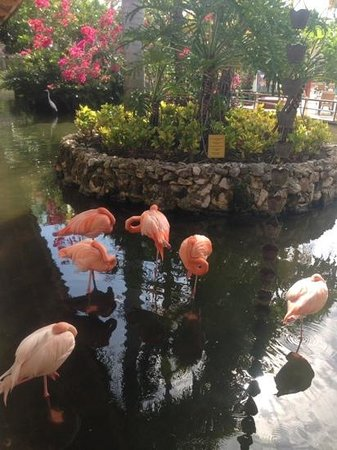 Iberostar Bavaro Suites: flamingos! (they didnt stink!)