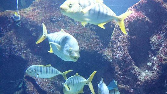 Aquarium La Rochelle : De gros poissons !