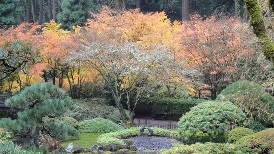 Portland Japanese Garden: Last of the fall colors in November