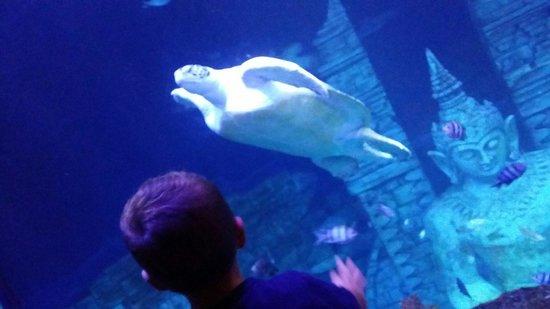 Lido di Jesolo Sea Life Aquarium: Il mio bimbo??? Incantato
