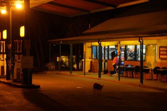 Kings Canyon Resort: Stacja benzynowa ze sklepem i dingo :)