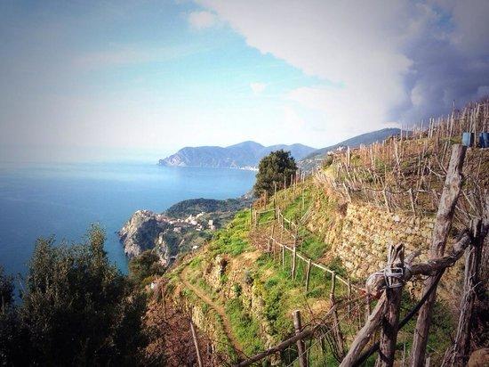 Tour Guide Cinque Terre