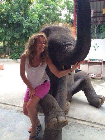 Hutsadin Elephant Foundation: Baby elephant