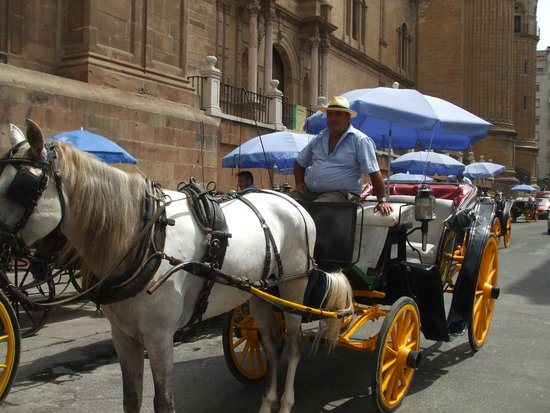 AC Hotel Malaga Palacio: Take a trip on one of these. 30 euros to see the city