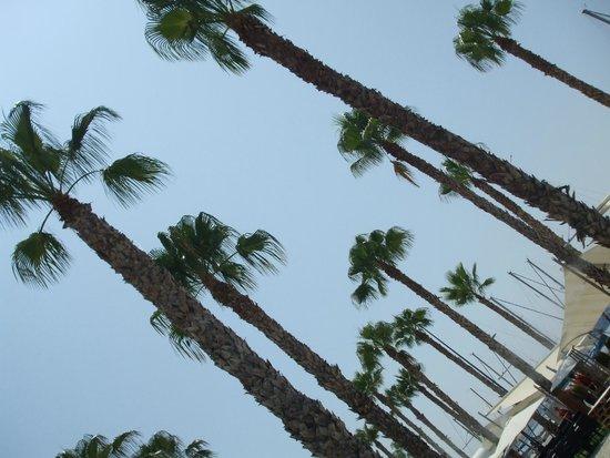 AC Hotel Malaga Palacio: Malaga palms