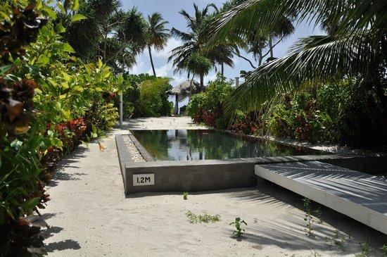 The Sun Siyam Iru Fushi Maldives: Бассейн на территории виллы