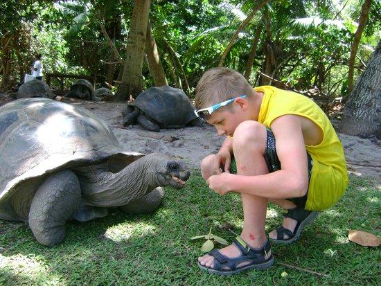 Curieuse Island : сейшельская гигантская черепаха