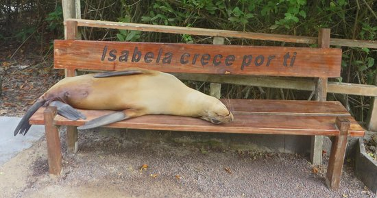 Galapagos Alternative: Sealion on Isabela