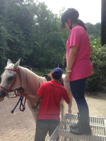 Island Horses: Need a little help to get on