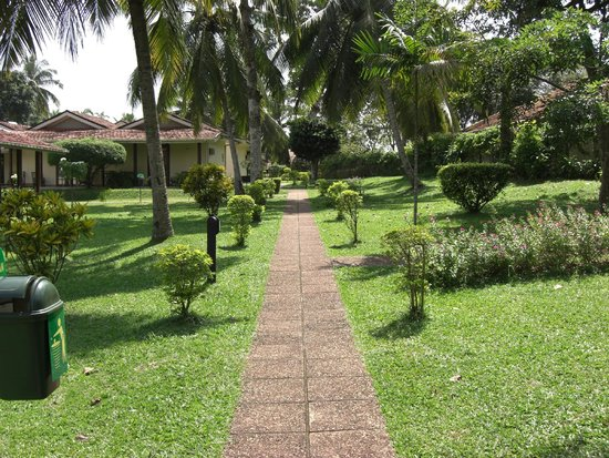 Tamarind Tree Hotel : Path