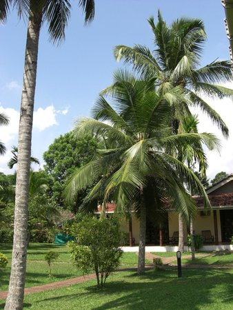 The Tamarind Tree Hotel : Palms