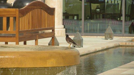 Ajman Saray, A Luxury Collection Resort : Птичка певчая