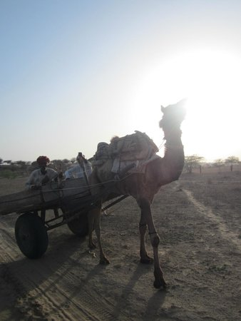 Thar Oasis Resort & Camp: camel cart