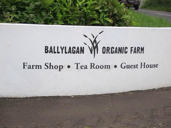 Ballylagan Organic Farm: BFM open farm weekend