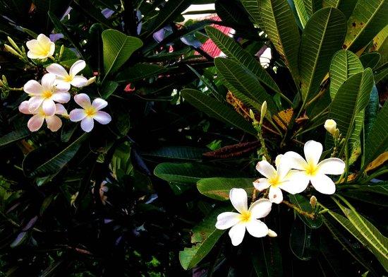 Baan Thai Resort : flower