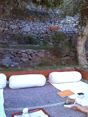 """Serena Shigar Fort : View of the """"wild-life"""" from our garden """"chill-out takhts"""""""