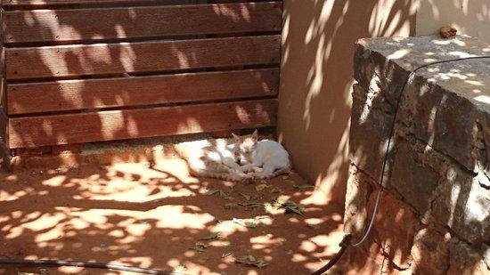 Загон для кошек