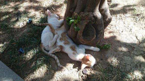 SENTIDO Blue Sea Beach : Отельные кошки на радость детям