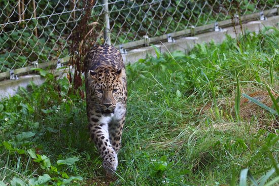 Zoo des Sables d'Olonne : guépard