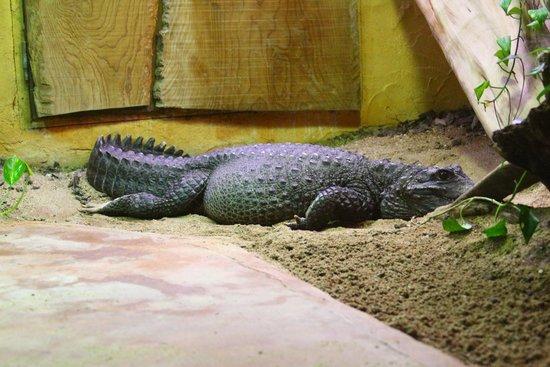 Zoo des Sables d'Olonne : crocodile