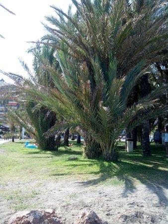 Marina Sur Hotel: Playa extensa,  con varias zonas de palmeras con cesped y zona de arena