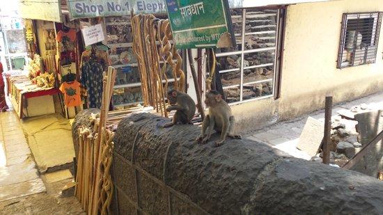 Elephanta Caves: Beware of monkeys!