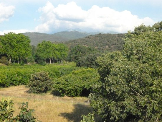 Le Mas Trilles : view from Le Framboisier