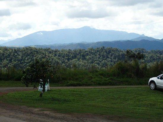 Mungalli Creek Organic Cafe: Mount Bartle Frere from Mungalli Creek Dairy