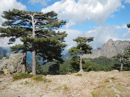 Aiguilles de Bavella (Bavella Needles): Les pins