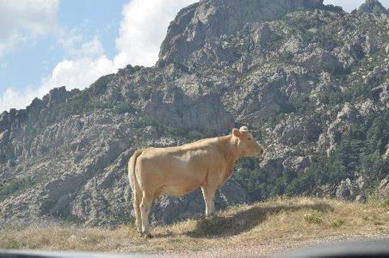Aiguilles de Bavella (Bavella Needles): Vache et montage
