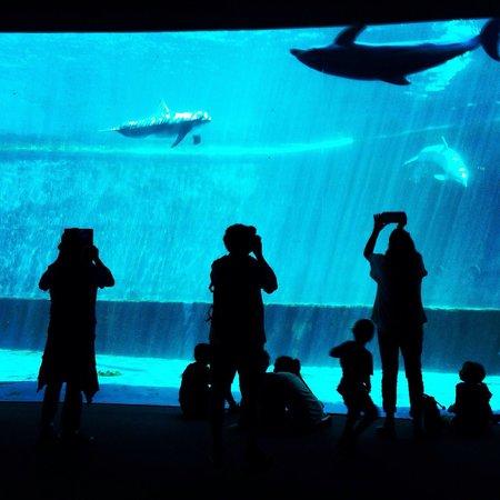 Acquario di Genova : Delfines
